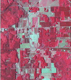NAIP imagery in color infrared (vegetation is red and soils are blue/green)